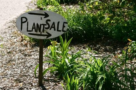 PLANT SALE – GREEN FINGERS GROUP D3