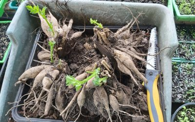 GARDENING DIARY 21st MARCH 2021