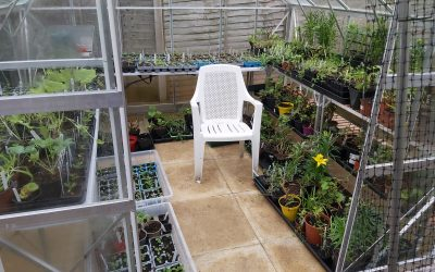 GARDENING DIARY 7th MARCH 2021